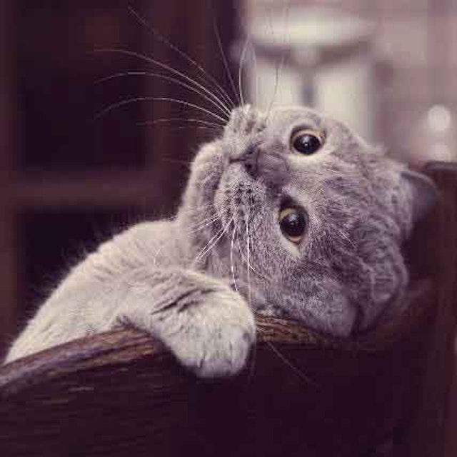 Cat Illness Symptom Checker   PetCareRx