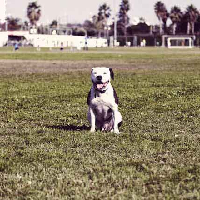 My Dog Is Shaking: 8 Possible Reasons | PetCareRx