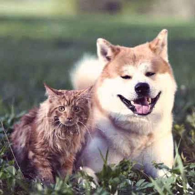 Advantage II vs Advantage for Cats and Dogs | PetCareRx