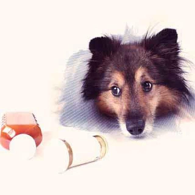Antibiotics for Dogs | PetCareRx