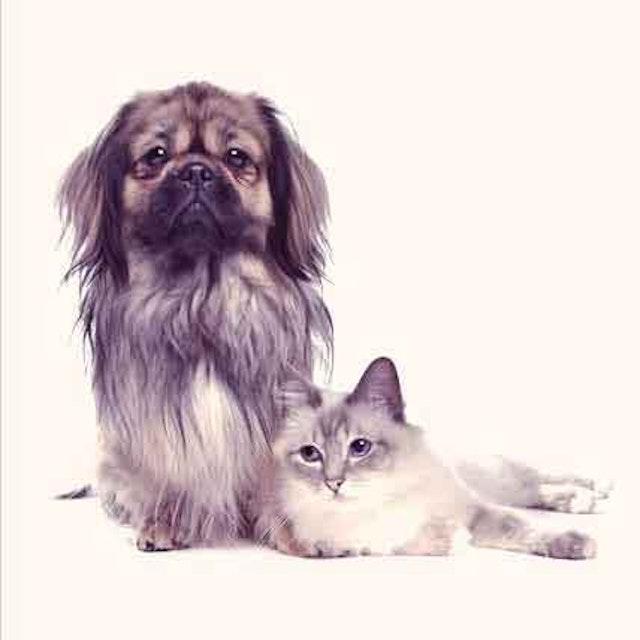 Best Dog Asthma Treatments - Helping Them Breathe Easier