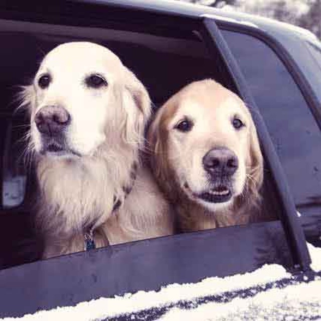 5 Steps to a Safe Drive with Your Dog | PetCareRx