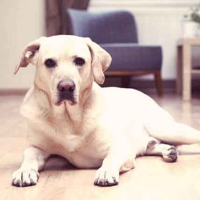 Managing Costs Of Cancer Treatment For Dogs Petcarerx