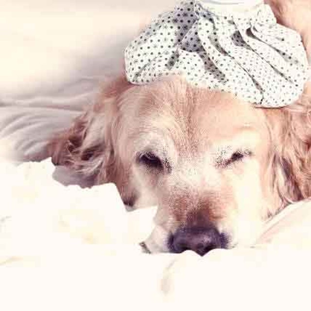 Caring For A Sick Dog: The Dos (And The Dont's) | PetCareRx