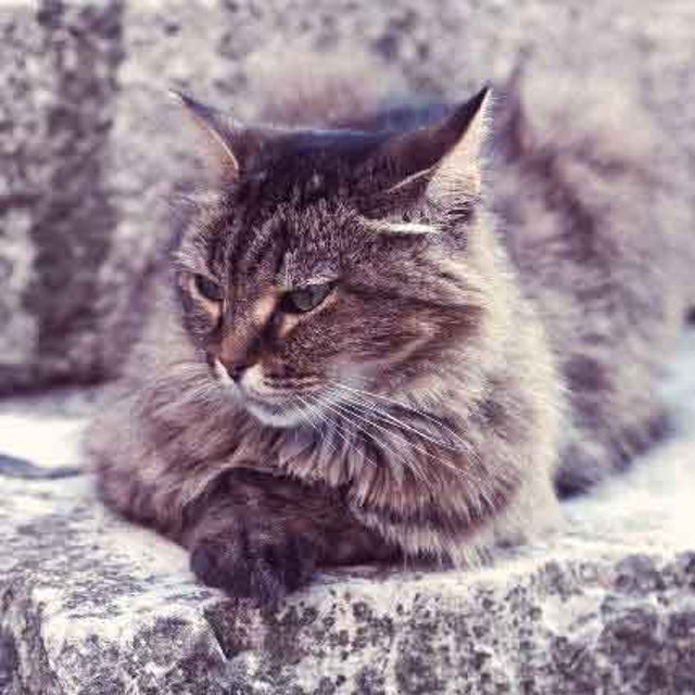 What Can Affect A Cat S Lifespan Petcarerx