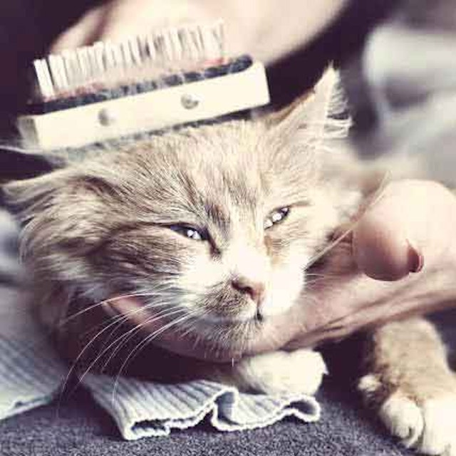 When Your Cat Doesn\'t Self Groom - PetCareRx