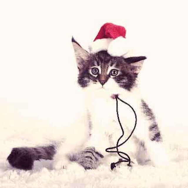 A Cat Proof Christmas Tree: It Is Possible! | PetCareRx