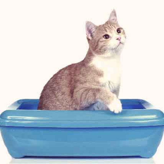 8 Reasons for Out-of-Litter Box Messes | PetCareRx