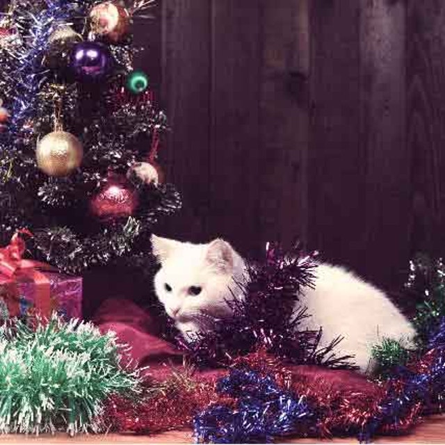 a cat proof christmas tree it is possible petcarerx - Are Christmas Trees Poisonous To Cats