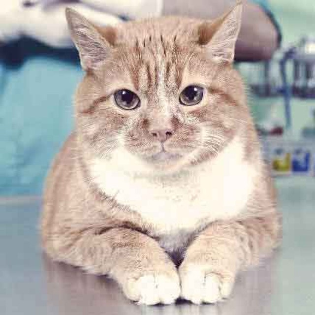 3 Heart-Breaking Signs of Rabies in Cats (Prevention Tips)