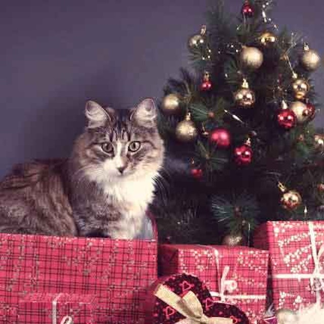 christmas trees - How To Keep Cats Away From Christmas Trees
