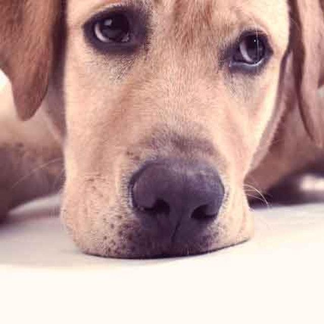 Dog Neurological Disorders and Brain Health   PetCareRx