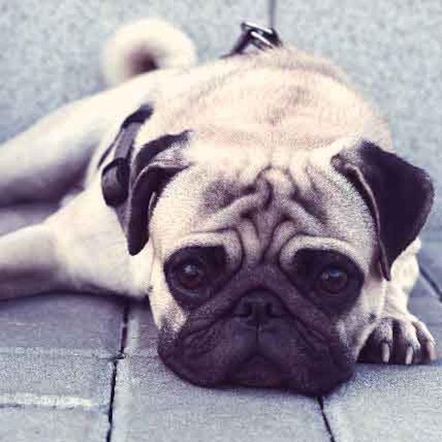 Dog Neurological Disorders and Brain Health | PetCareRx