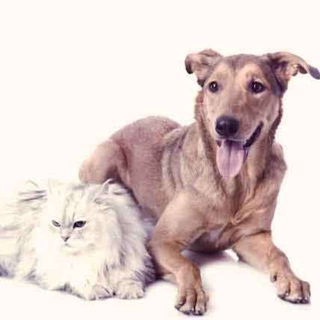Liver Cancer in Dogs and Cats | PetCareRx