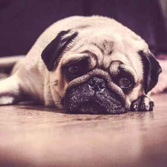 3 of the Most Effective Dog Depression Treatments | PetCareRx