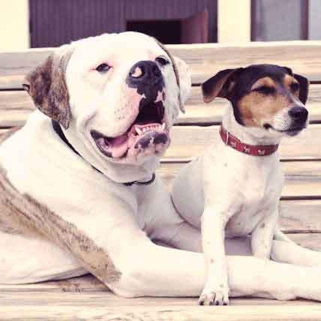 Dog Breed Weight Chart - Fat Dog, Skinny Dog | PetCareRx com