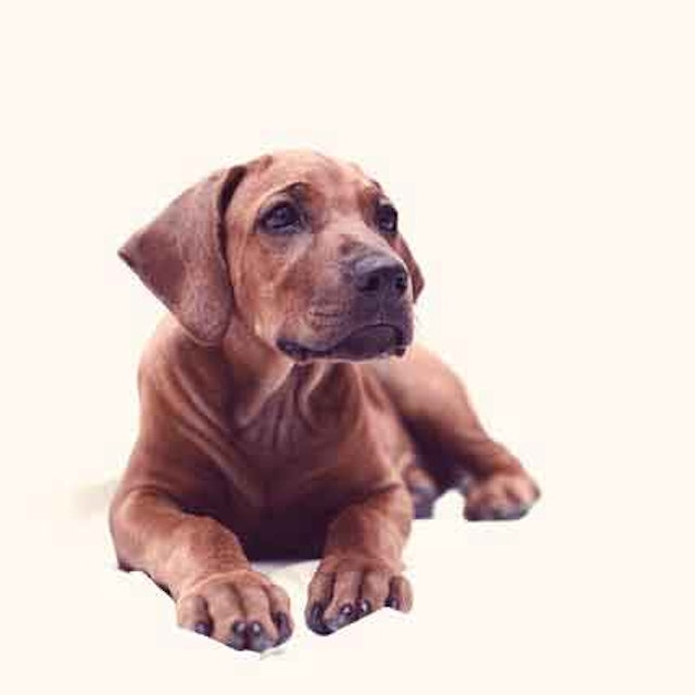 Is There A Way To Use Frontline For Puppies Petcarerx