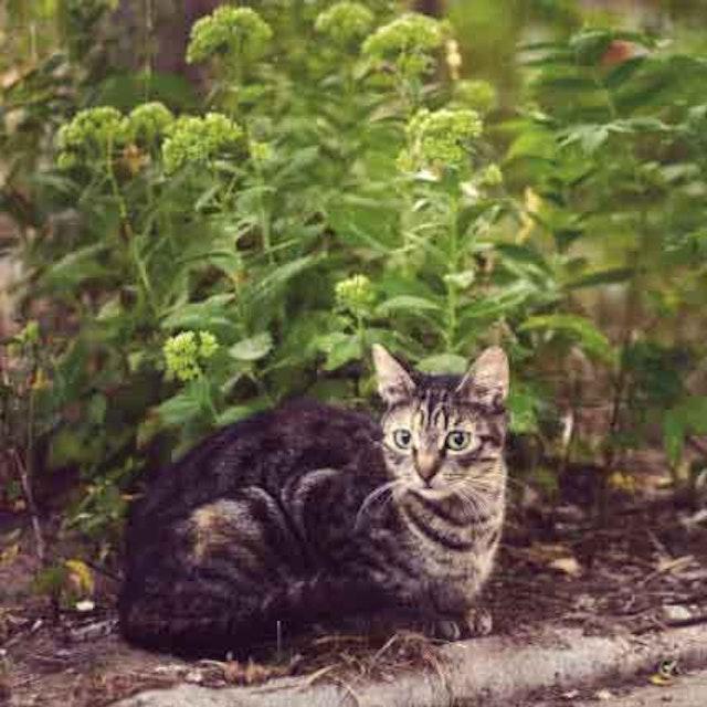 Revolution vs Frontline: Comparing Pest Preventatives