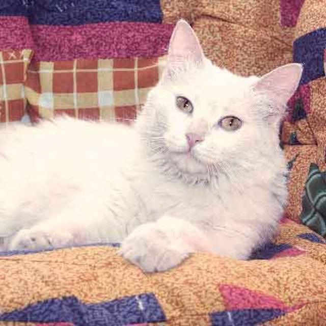 How To Identify A Cat Bowel Obstruction Petcarerx