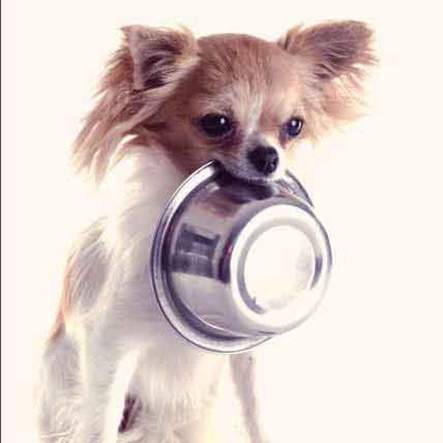 Is My Dog Allergic To Chicken Petcarerx