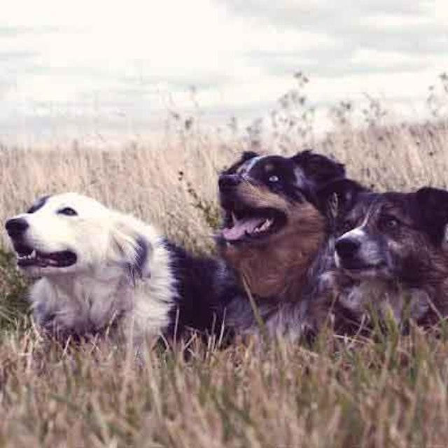 Frontline vs Advantix for Dogs - PetCareRx