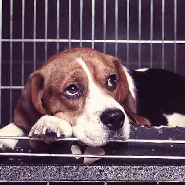 All About Dog Pneumonia Petcarerx