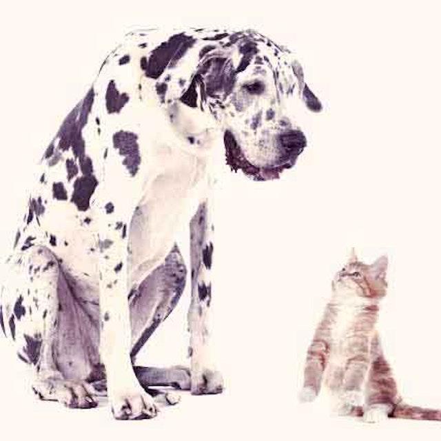 Droncit (Cestocide Tablet) - Deworming Medicine for Dogs
