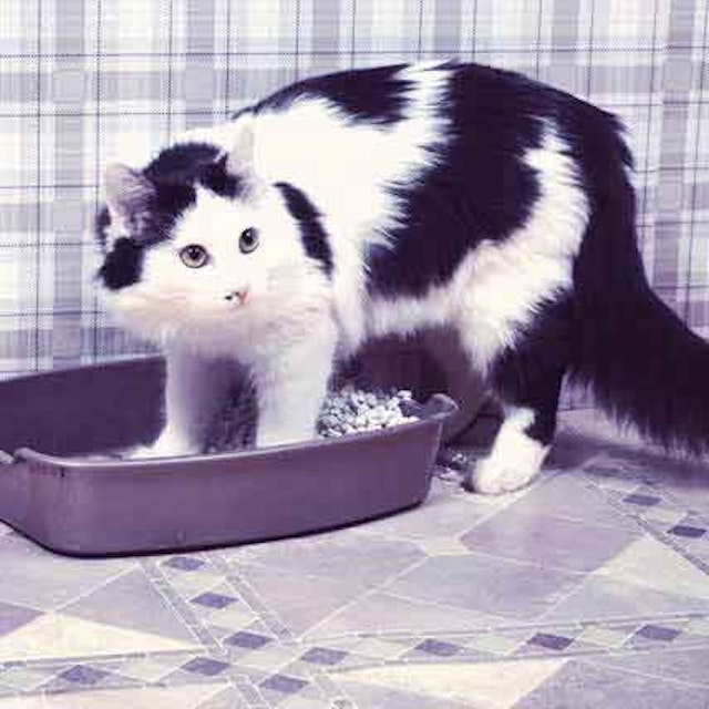 8 Reasons for Out-of-Litter Box Messes   PetCareRx