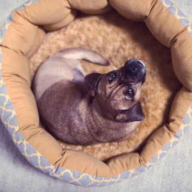 How To Make A Dog Bed At Home