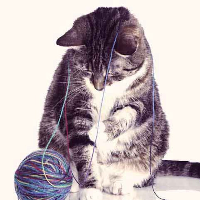 Mix It Up With A New Cat Toy