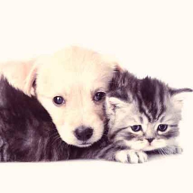 Treating Hematomas in Dogs and Cats | PetCareRx