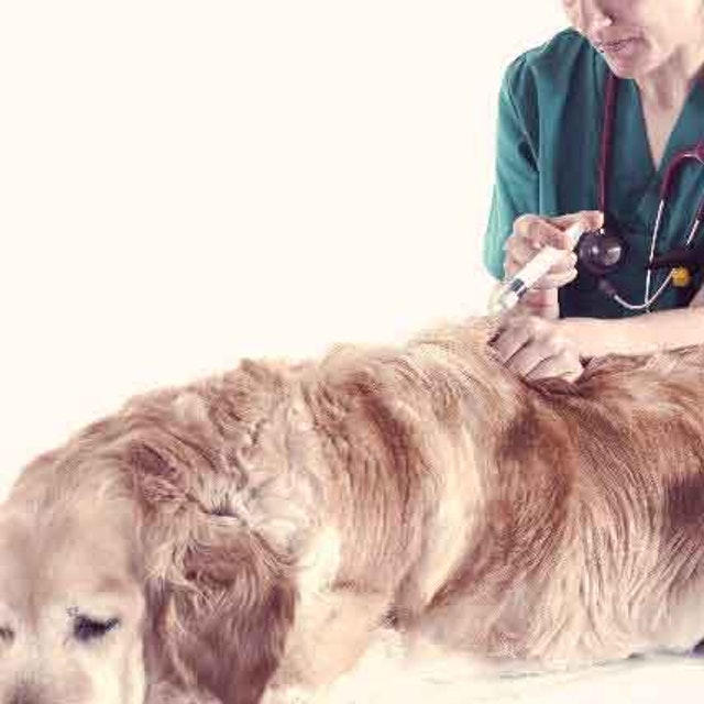 Cancer Drugs for Dogs - What Are Your Options? | PetCareRx