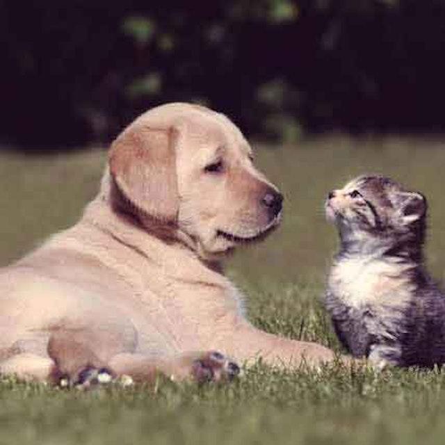 When to Call Animal Poison Control | PetCareRx