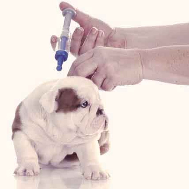 Puppy Vaccinations Petcarerx