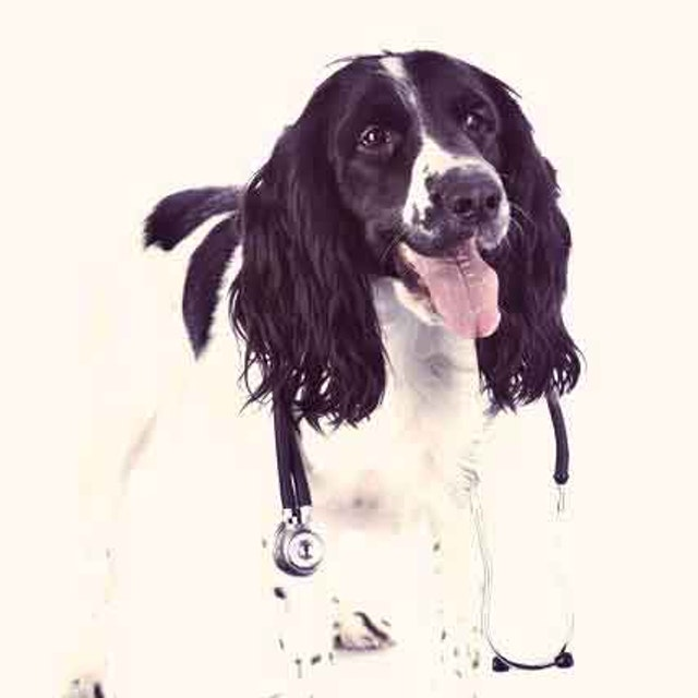 How K9 Advantix Ii For Dogs Works Petcarerx