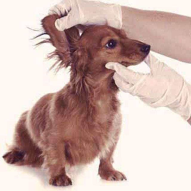 Dog Diseases and Symptoms: A to Z | PetCareRx