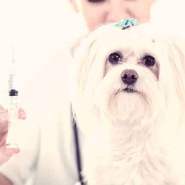 The Pros And Cons Of Heartworm Shots | PetCareRx