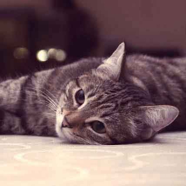 Thyroid Problems In Cats: The Likely Cause | PetCareRx