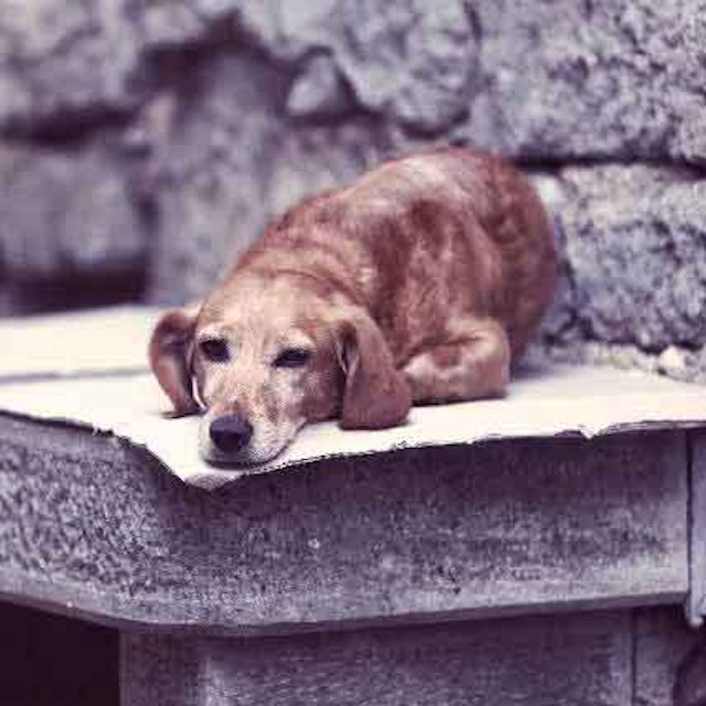 Signs of Depression in Dogs & How to Deal with It | PetCareRx