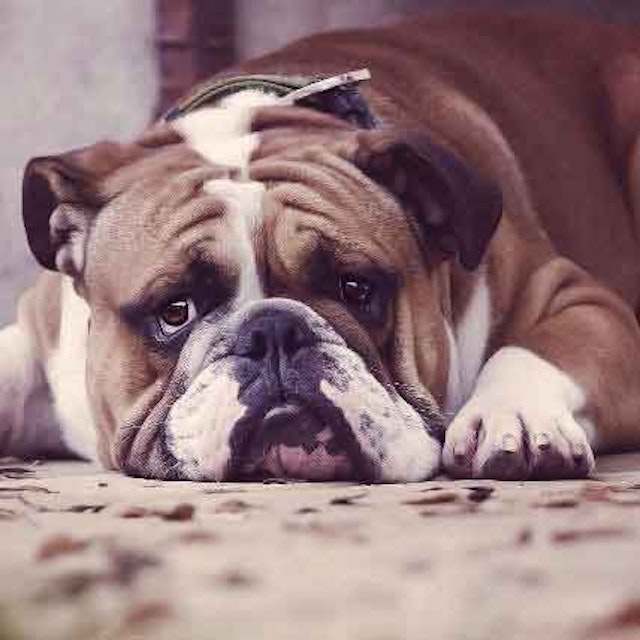 How To Treat And Prevent A Dog Bowel Obstruction   PetCareRx