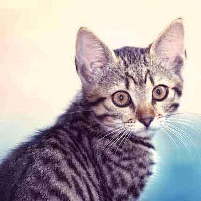 Cat And Dog Roundworm Treatment Petcarerx