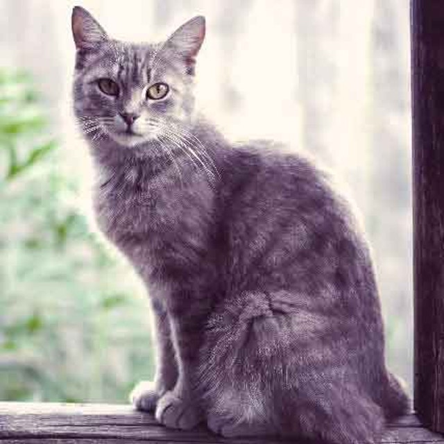 Symptoms of Anemia in Cats | PetCareRx