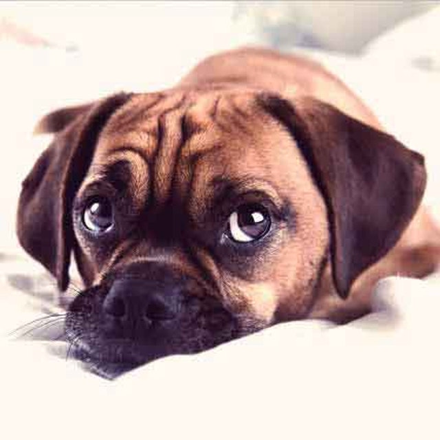 7 Signs Of A Sick Puppy And The Solutions Petcarerx