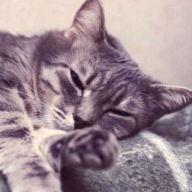 Warning Signs Of Kidney Failure In Cats Petcarerx