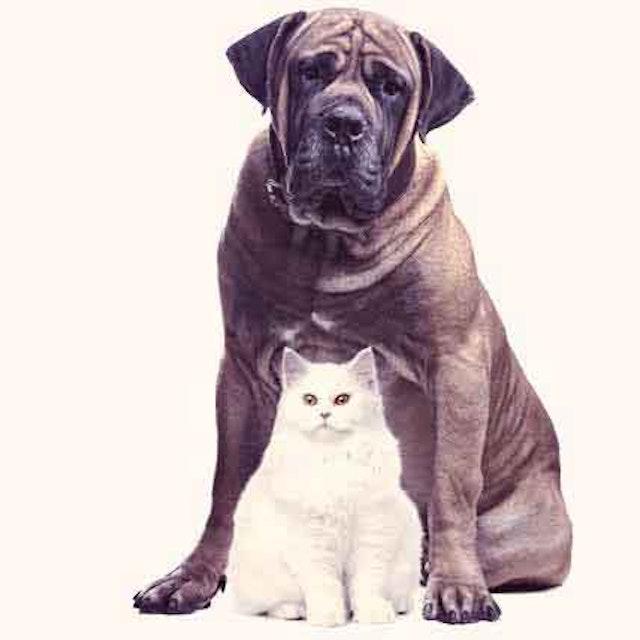 Cat And Dog Roundworms Petcarerx