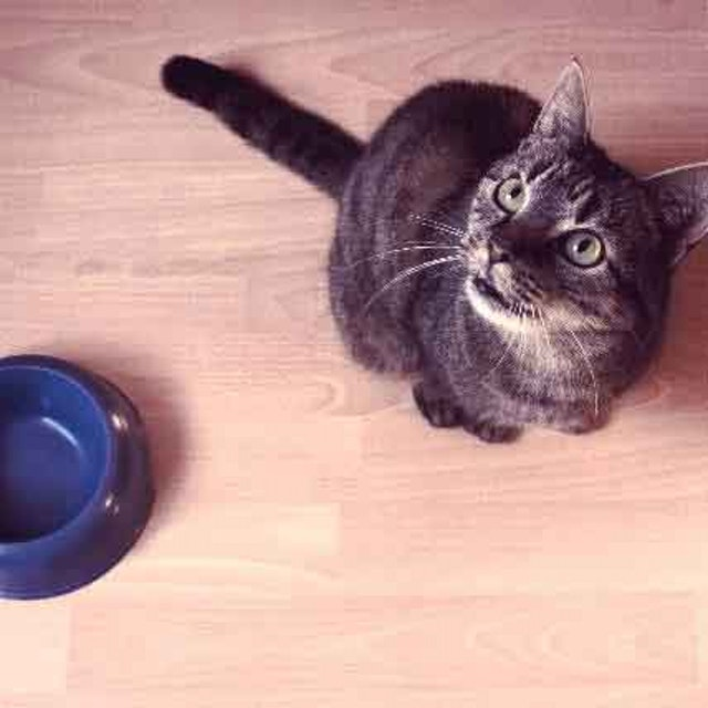 Why Is My Cat Throwing Up After Eating?   PetCareRx