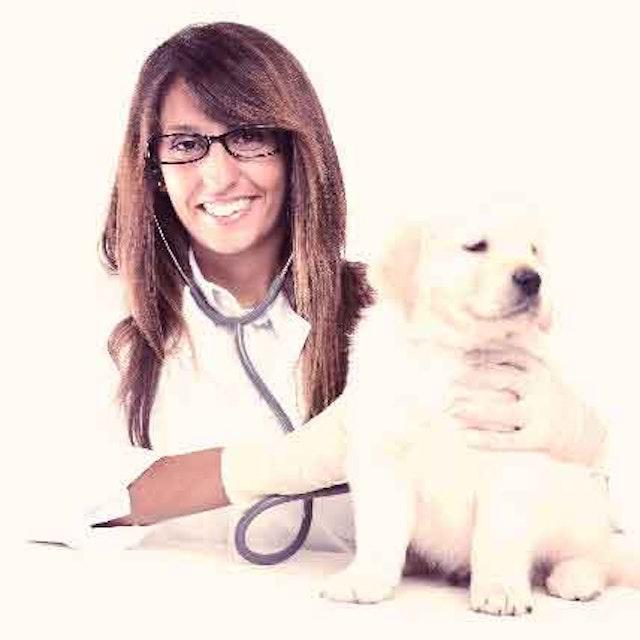 Your Puppy's First Vet Visit | PetCareRx