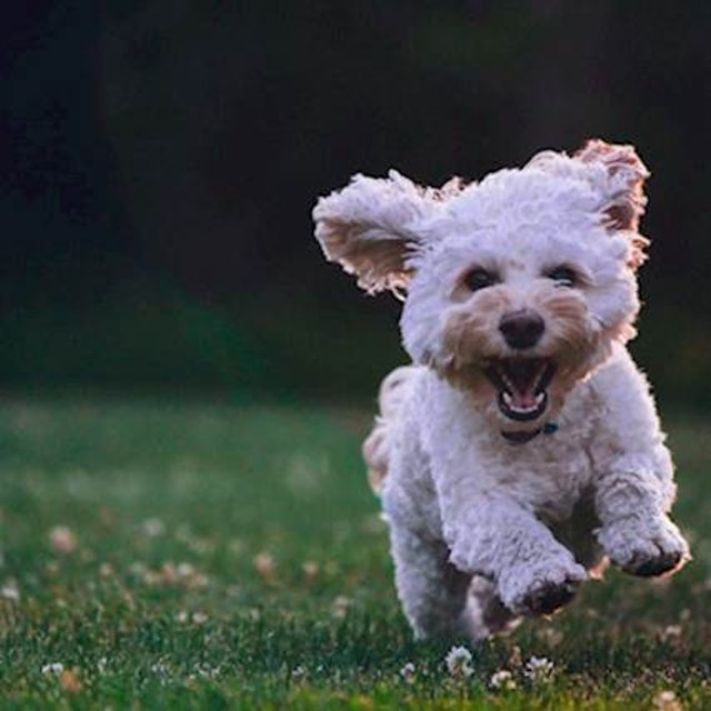 DIY Dog Dry Skin Treatment (and Handy Medications) | PetCareRx